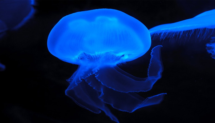 Jellyfish-inspired electronic skin glows when hurt