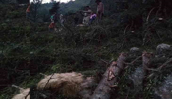 Man, 116 Cattle Killed After Portion Of Hill Falls In Himachal Pradesh
