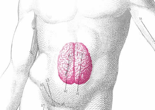 The second brain, in your gut