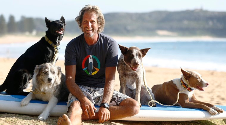 Can you teach a dog to surf? Apparently you can